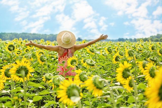 inspiratieworkshops zonnebloemen